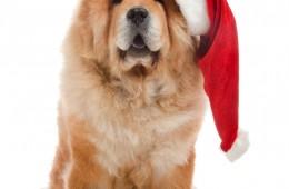 Weihnachtlicher_Geschenke_Guide, Titel